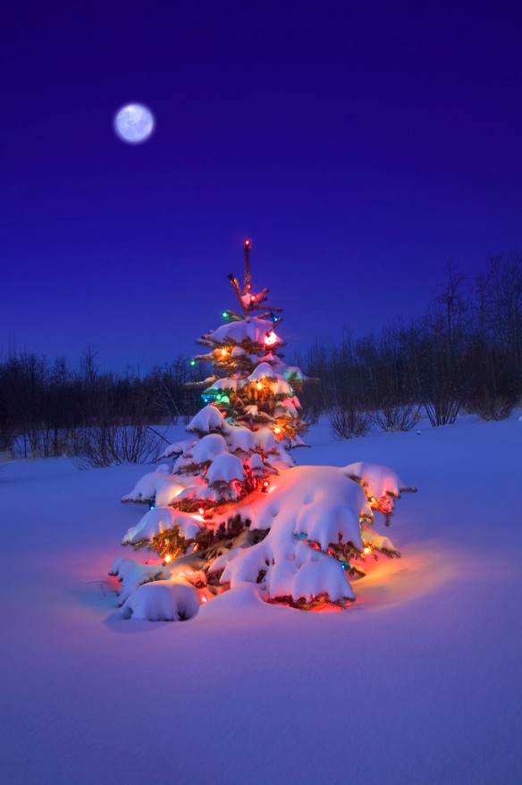 Glowing Christmas Tree in Snow